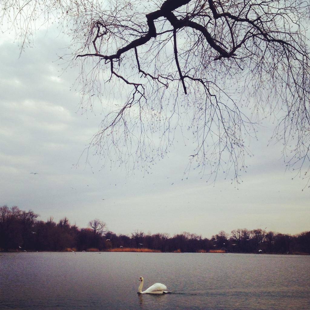 Prospect Park, Brooklyn, NY