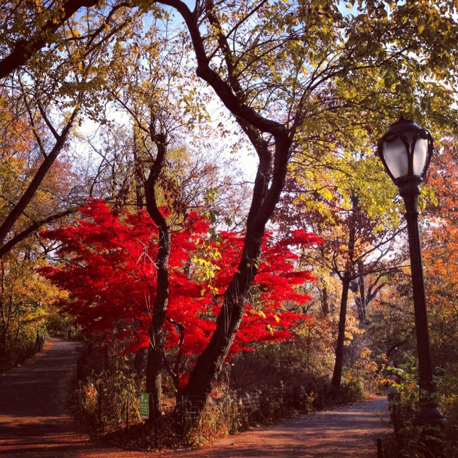 Fall in Central Park 2